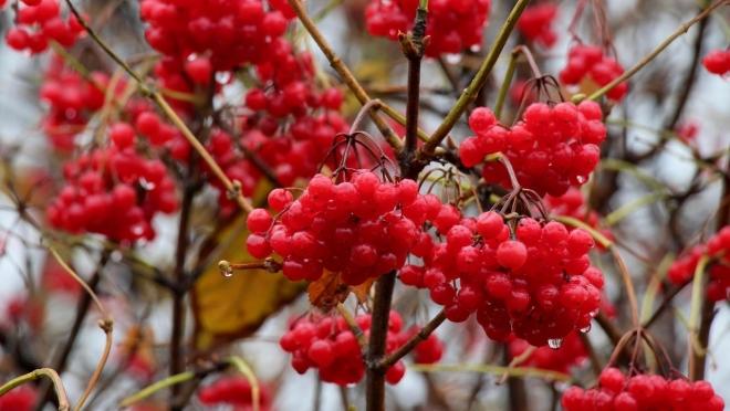 Ноябрьские каникулы порадуют жителей Марий Эл тёплой погодой