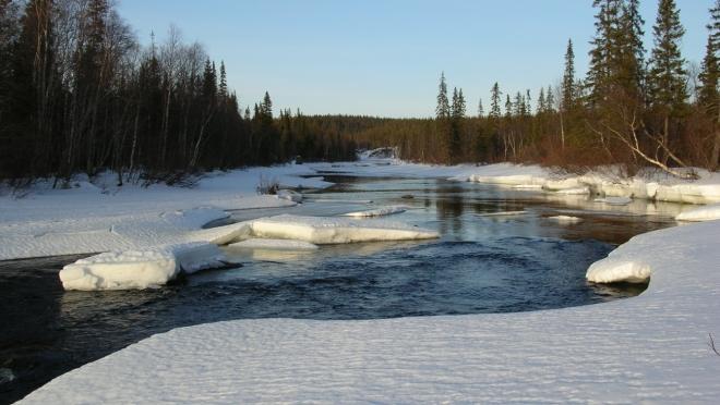 В Новоторъяльском районе появилась охранная зона на реке Пича