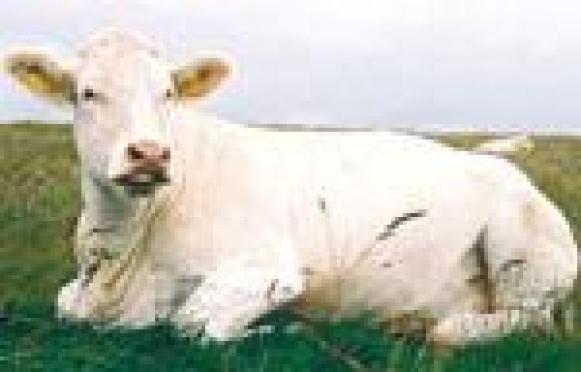 Повышение цен на закупку коровьего молока серьезно простимулировало население Марий Эл