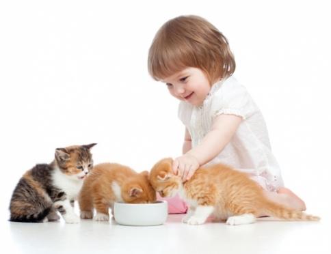 Аллергия на домашних животных: что с этим делать?