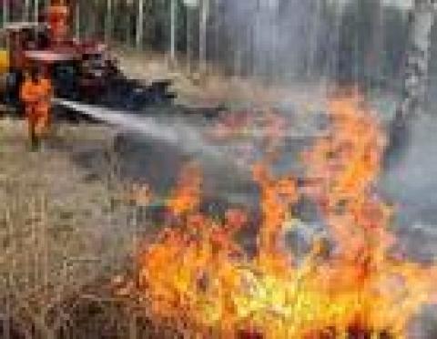 В Марий Эл снова горят леса
