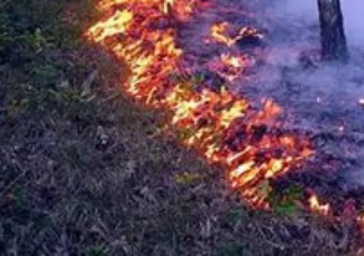 С начала августа в регионе зафиксировано четыре лесных пожара
