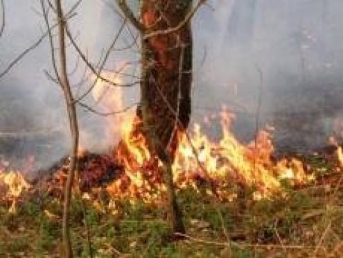 В Марий Эл вновь от разряда молнии загорелся лес