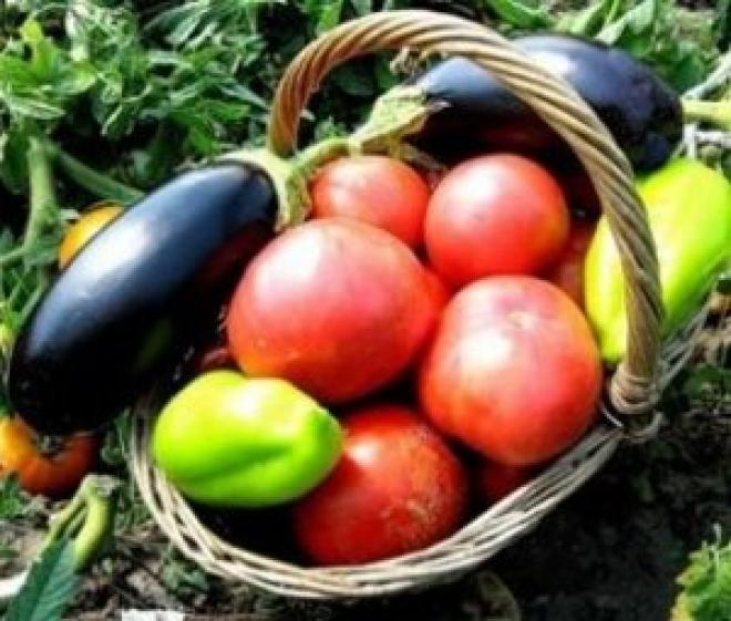 В Йошкар-Оле откроется сельскохозяйственный рынок «выходного дня»