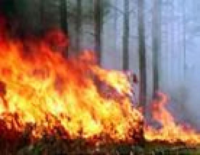 На локализацию лесного пожара в Килемарском районе Марий Эл потребовалось 10 часов