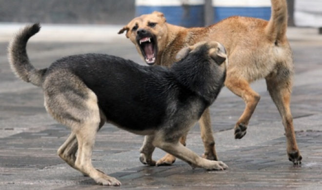 В Волжске орудуют бездомные животные