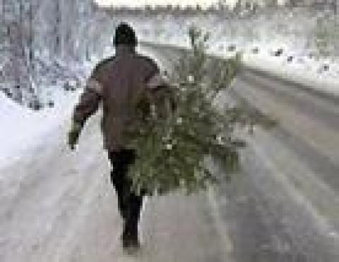 Минлесхоз в преддверии Нового года поставил жителей Марий Эл перед выбором: купить елку за 150 рублей или за 3 тысячи