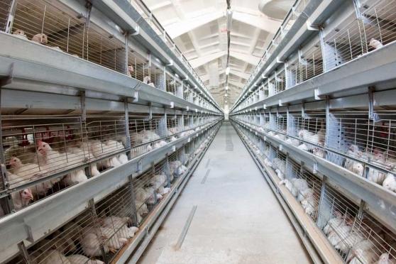 Республика Марий Эл является лидером в России по производству птицы