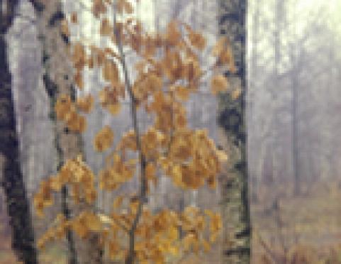Пожароопасный сезон на территории лесного фонда Марий Эл закрыт