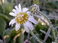 Синоптики Марий Эл прогнозируют ночные заморозки на почве