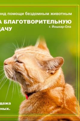 Мартовские кошки постер