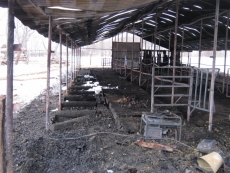 В Горномарийском районе сгорела ферма. Погиб домашний скот