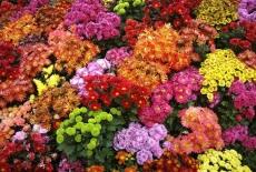 В России уничтожили партию цветов из Голландии и Эквадора
