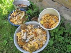 МЧС напоминает: собираясь за грибами, помните о мерах предосторожности