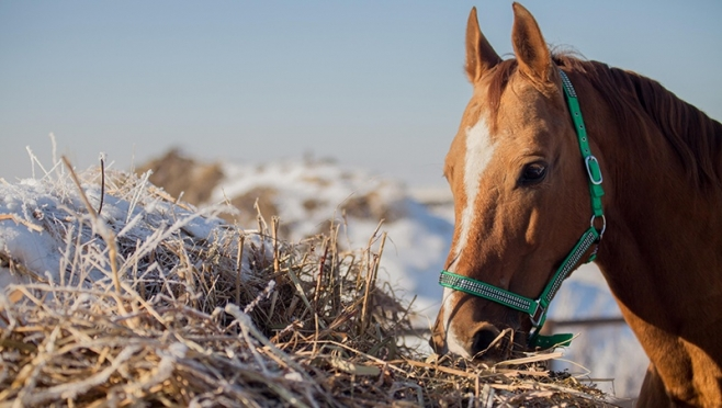 Национальный парк «Марий Чодра» потерял конюшню