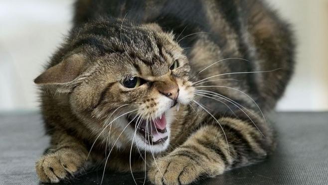 В Марий Эл 302 человека пострадали от укусов домашних, бездомных и диких животных