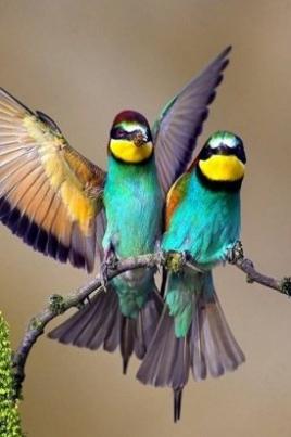 Декада птиц «Пернатые создания природы» постер