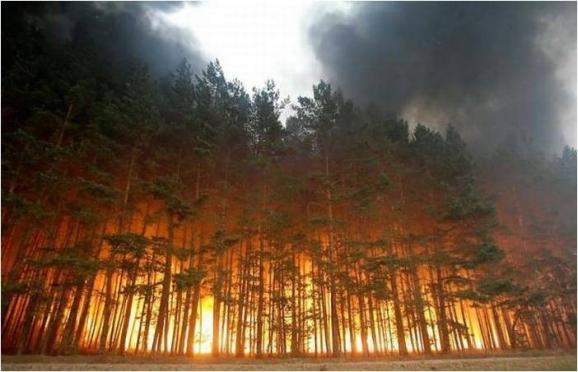 В Марий Эл устанавливается особый противопожарный режим