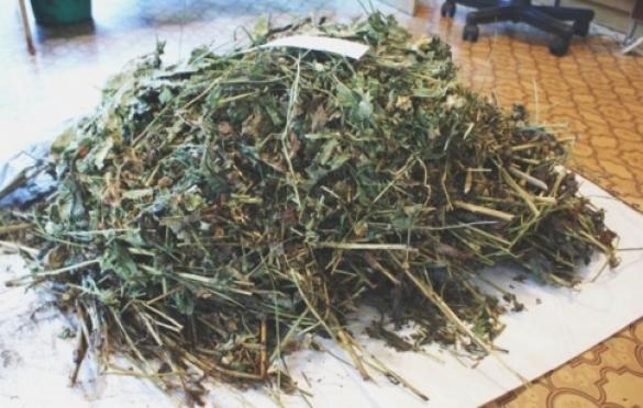 Житель Марий Эл получил условный срок за хранение маковой соломки