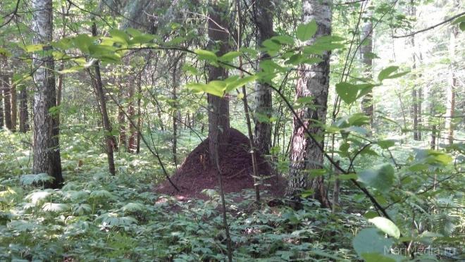 Марийские леса снискали славу «бермудского треугольника»