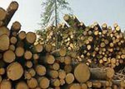В Марий Эл раскрывается каждое второе преступление в сфере лесного хозяйства
