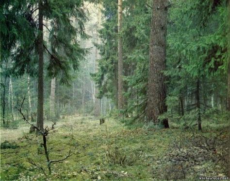 Бывший руководитель одного из марийских лесничеств пойдет под суд