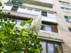 В Йошкар-Оле высадят 800 деревьев и кустарников