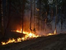 В Марий Эл произошло шесть лесных пожаров