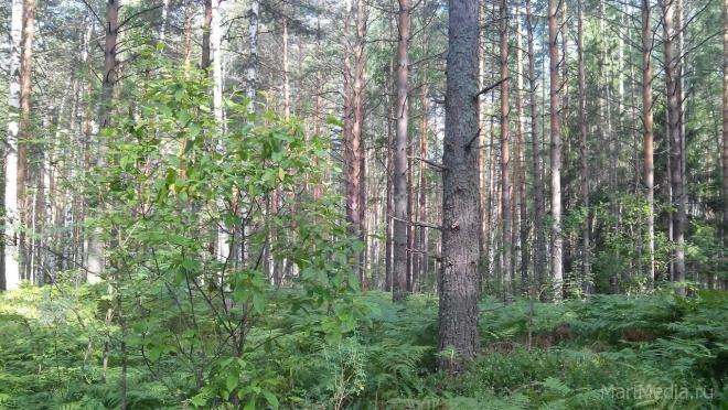 Пенсионерка из Звенигова пропала в лесу