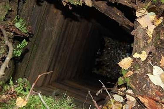 Трехлетний мальчик утонул в заброшенном колодце (Марий Эл)