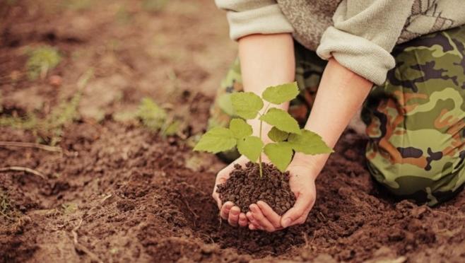 В Марий Эл 1,5 тысячи гектаров засадят лесом