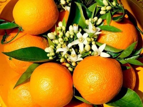 205 тонн египетских апельсинов задержали на российской границе
