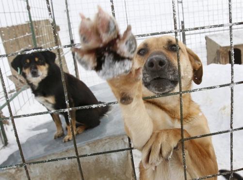 Детсадовцы накормили бездомных животных