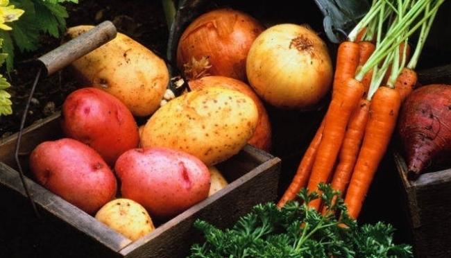 Излишки плодоовощной продукции можно сдать государству