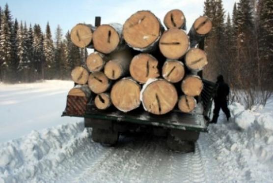 В Марий Эл завели 20 уголовных дел за незаконную вырубку леса