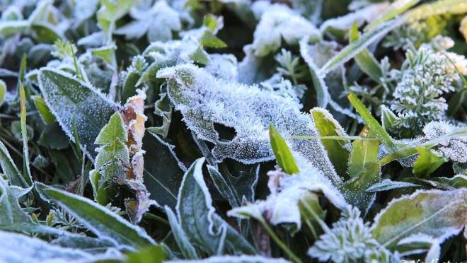 Синоптики Марий Эл предупреждают о ночных заморозках