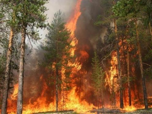 В лесах Марий Эл регистрируется высший класс пожарной опасности — V