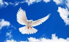Сегодня в небо Йошкар-Олы взмоют белые голуби