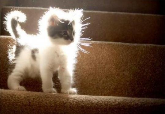 Жительнице Йошкар-Олы котенок обошелся в 5 000 рублей