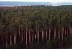 Заблудившегося в лесах Марий Эл 70-летнего мужчину искали два дня