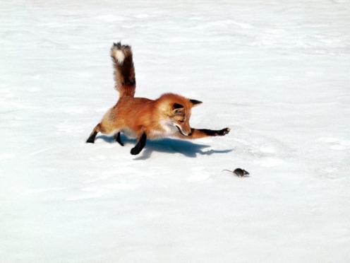 Охотники Марий Эл знакомятся с новыми госпошлинами на отстрел животных