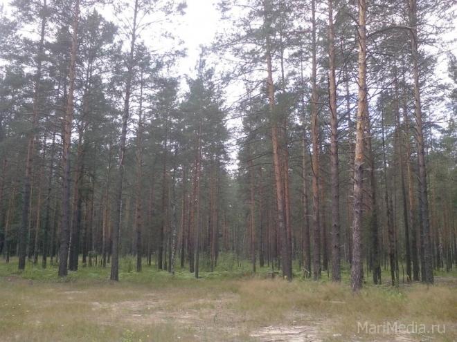 Йошкаролинка, заблудившаяся в лесу в Оршанском районе, найдена
