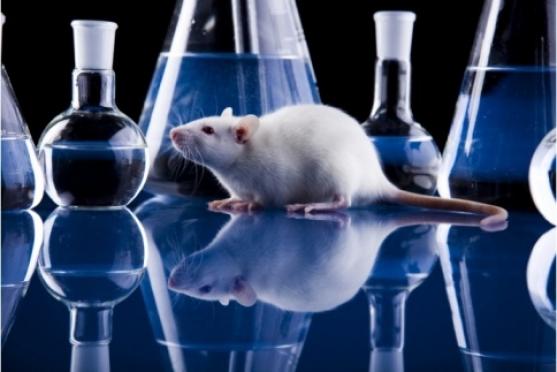 На подопытных животных хотят запретить тестировать косметику и бытовую химию