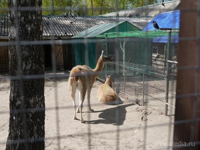 Медведевский зоопарк принимает от гостей фруктово-овощные лакомства для животных