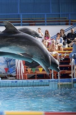 Московский дельфинарий в Йошкар-Оле постер