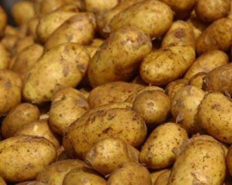 Урожай картофеля в Марий Эл выше прошлогоднего