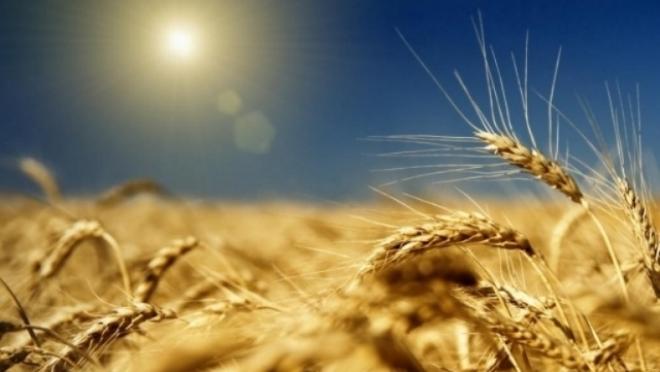 Аграриев Марий Эл пригласили на Всероссийский форум сельхозпроизводителей