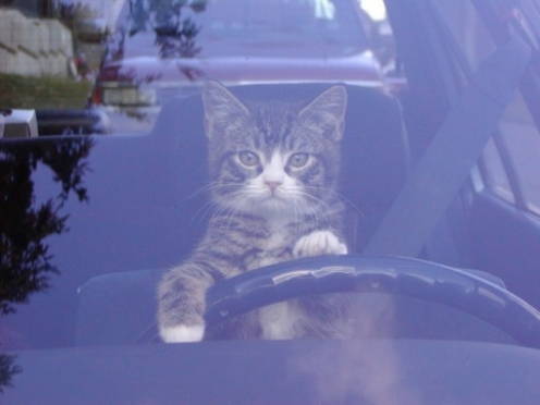 Бездомные кошки помогут реконструировать Lada Kalina