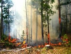 Пожарные Марий Эл трижды выезжали на тушение лесных пожаров