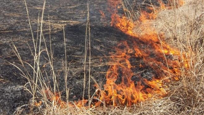 На прошлой неделе в Марий Эл пожары уничтожили 30 тонн зерновых